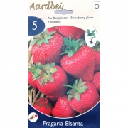 КЛУБНИКА STRAWBERRY ELSANTHA  5 шт.